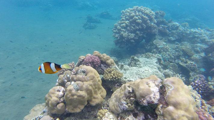 Apo Island, Philippinen