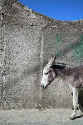 Esel in Himarë, Albanien