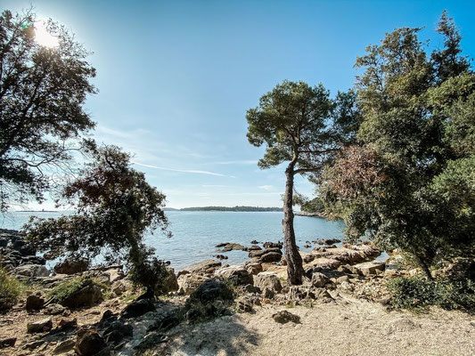 Rovinj Park Forest Zlatni Rt, Kroatien