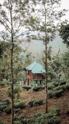 Thekkady, Indien