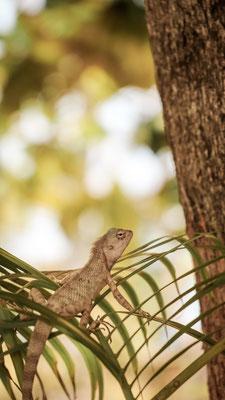 Reptiel, Indien
