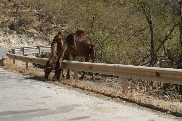 Wadi Darbat, Oman