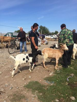 Tiermarkt, Albanien