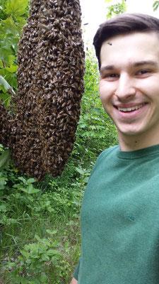 ein Bienenschwarm 3x so groß wie mein Kopf