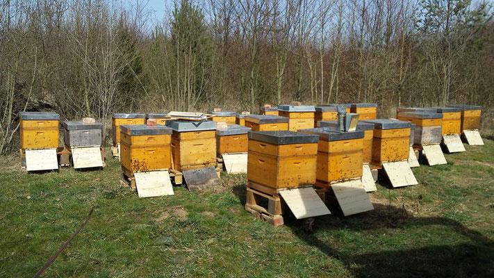 das Bienenjahr beginnt