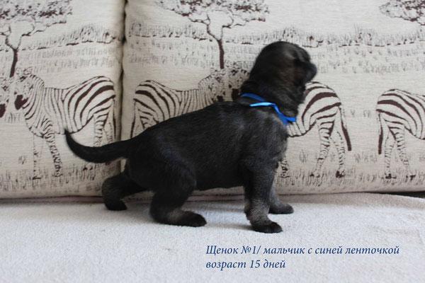 Blue boy - 29/04/2015 (15 days old)