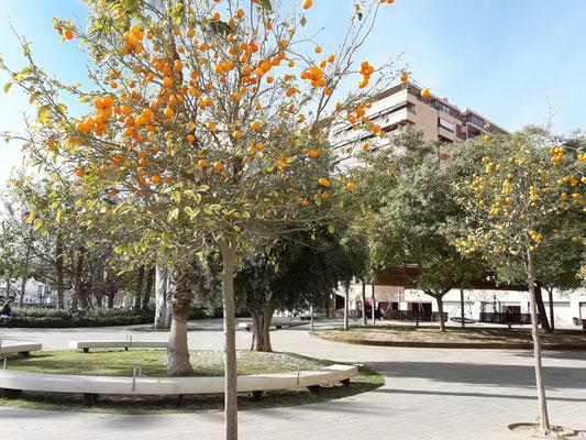 Alquiler oficina Alicante, junto al Puerto Comercial y Deportivo, Casa Mediterráneo, próximo a EUIPO, Estacion Tren AVE, Hoteles, Alicante Business World, Centro Negocios Alicante, Estación Autobuses, Distrito Digital, Aeropuerto Internacional Alicante