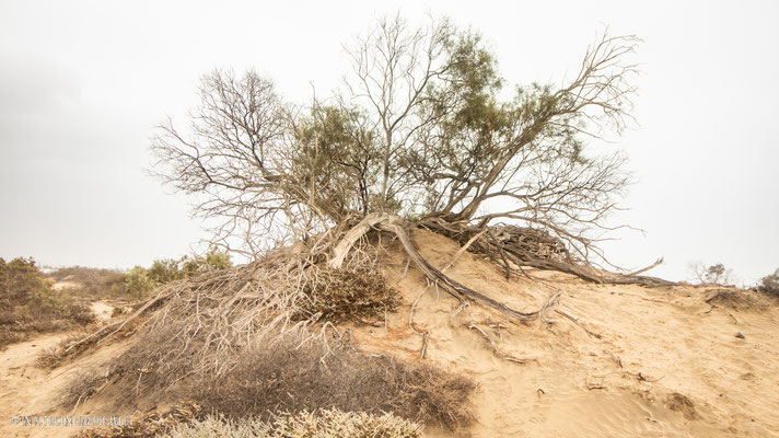 Naturschutzgebiet Dünen von Maspalomas