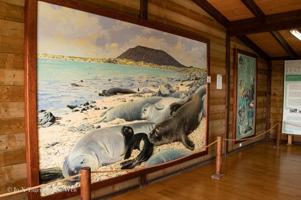 Insel Lobos