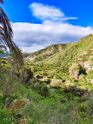 Jardin Botanico Canario