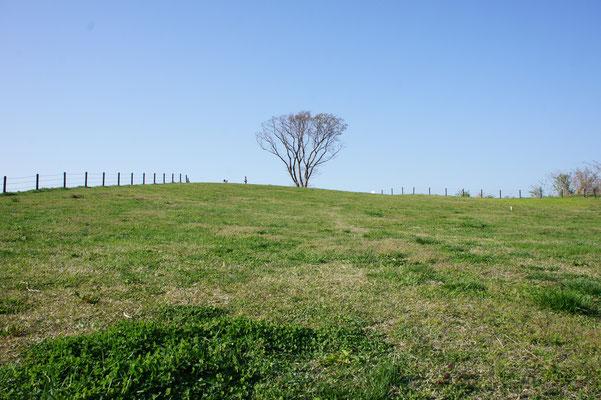 青空の下、小高い丘を目指すと