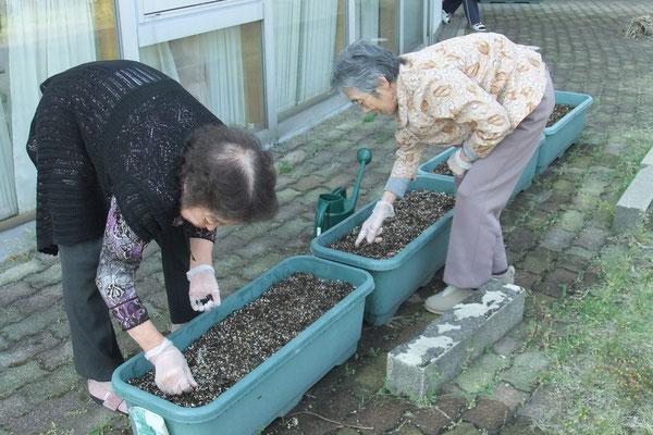 こちらでは、アサガオの種を植えています。