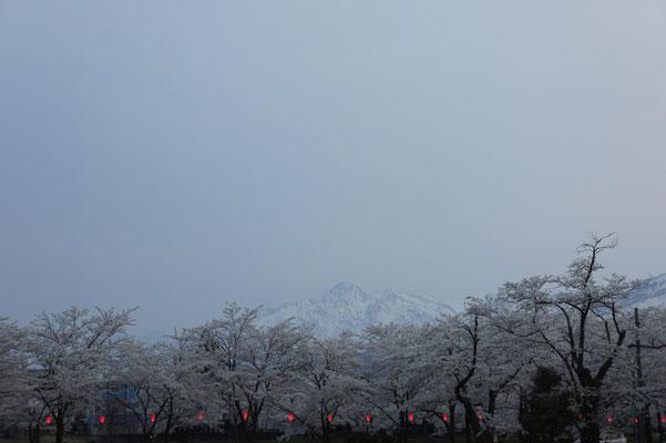 妙高山と桜のコラボレーション