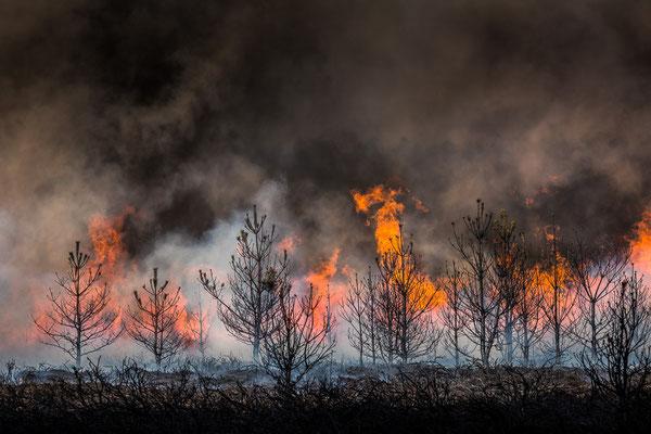 Feuer in der Heide