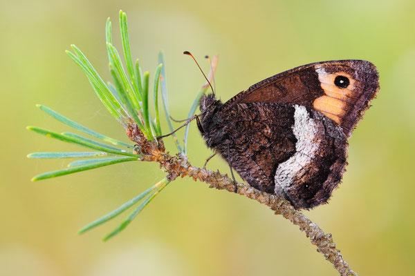 Kleiner Waldportier
