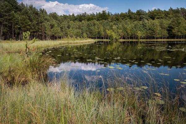Lebensraum der Zwerglibelle in der Uckermark