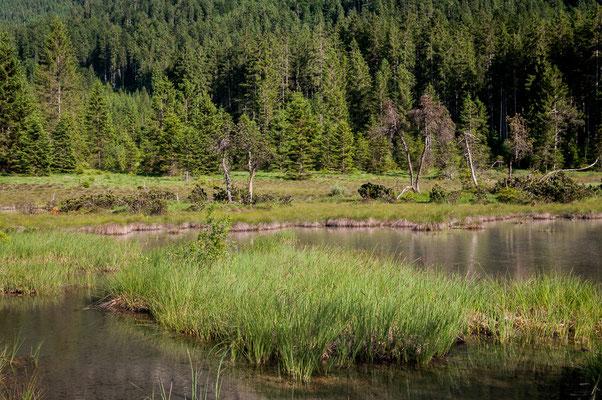Lebensraum der Sibirischen Azurjungfer im Tiroler Lechtal