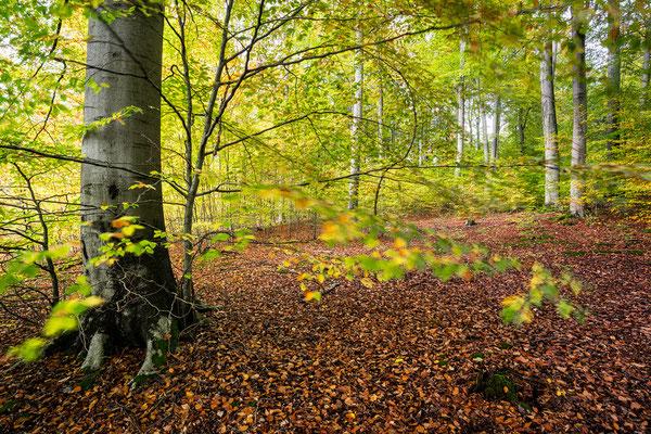 Herbstimmung im Grumsin