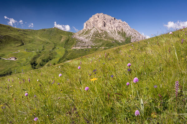 Kugelorchis im alpinen Lebensraum
