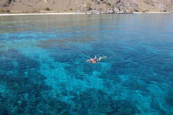 Faire du snorkeling dans le parc de Komodo