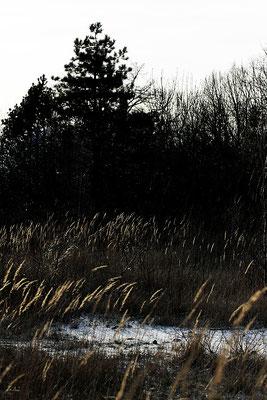 Winterlandschaft, Januar 2014