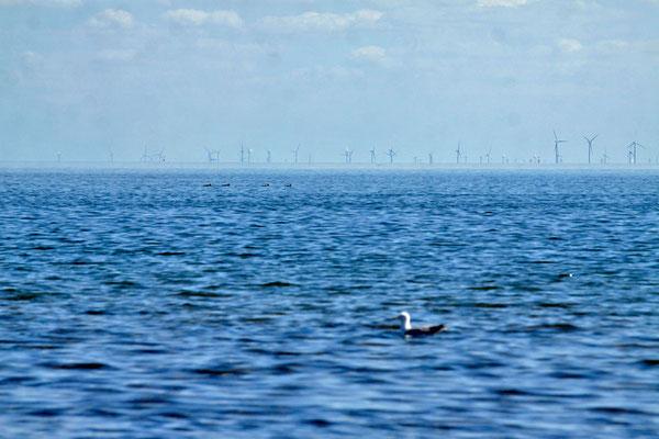 Windpark vor Sylt