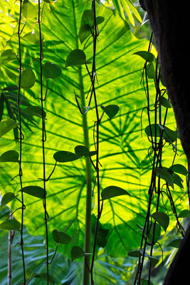 Blätter Schattenspiel - Gondwana Land, Zoo Leipzig, 2012