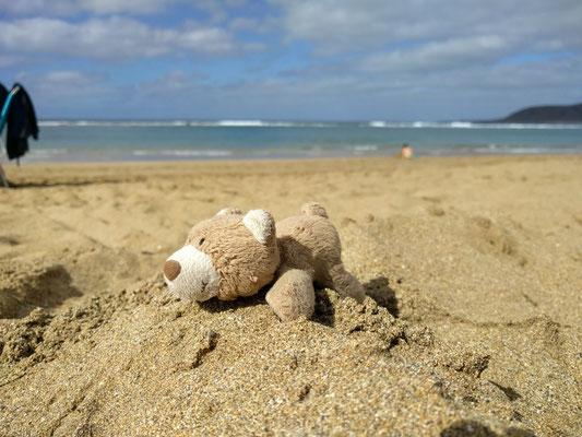 Stups war natürlich auch mit dabei! Hier beim sonnen am Strand :-)