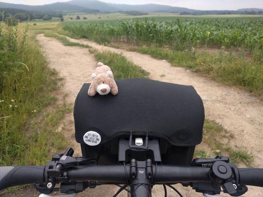 Stups der Bär - bei jeder Reise mit dabei!