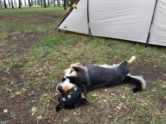 Wurschti der Campinghund
