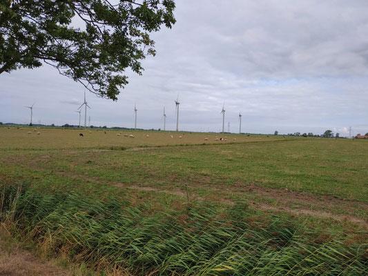 Windräder und Schafe in Niedersachsen