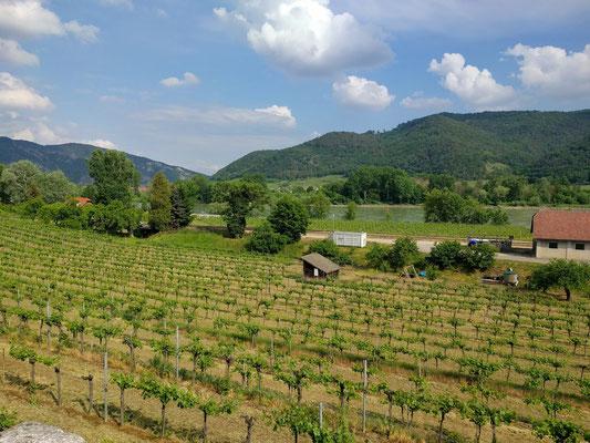 Wachau: Wein und die Donau