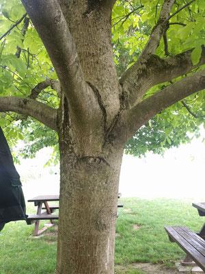 Rastplatz mit sehendem Baum