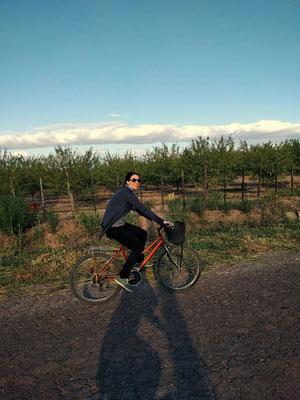 Radlerin radelt zwischen den Weingärten in Mendoza