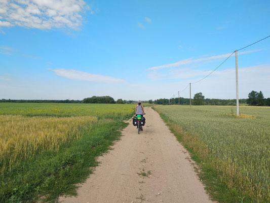 Auf dem Feldweg entlang