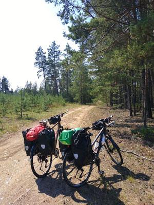 ... und noch mehr Wald