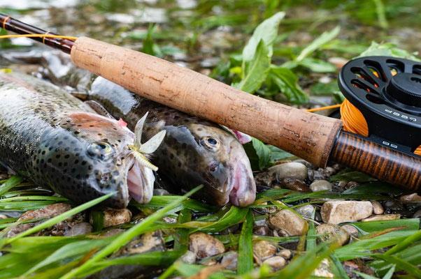 Fliegenfischerschule Allgäu - die Fliege macht den Unterschied