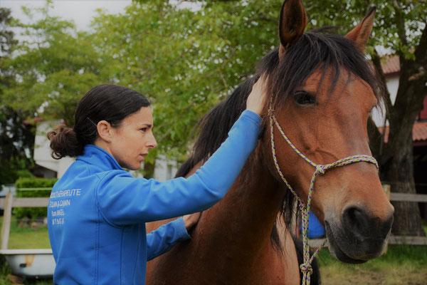 Massage Manuel sur Cheval