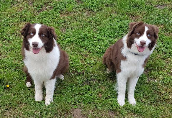 Quinnie und ihre Mama Amy (links)