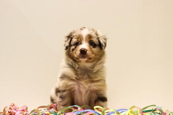 6 Wochen alt