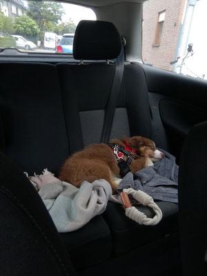 Hailey liebt Autofahren! ;)