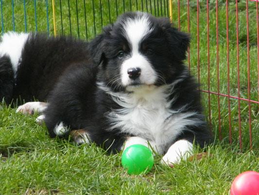 7 Wochen alt