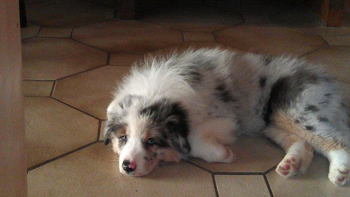 Tinka (9 Wochen) im neuen Zuhause! :)