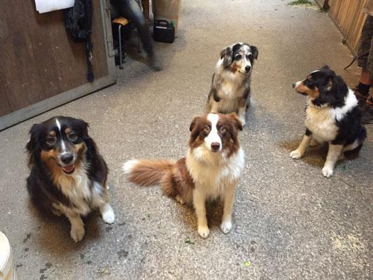 23 Monate (links neben Ruby sitzt Spirit, Sunnys Bruder, und hinter Ruby befinden sich Flash, Sunnys Mama, und Wonder, Sunnys Schwester)