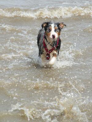 Fast 4 Monate alt - Hundestrand in Krautsand