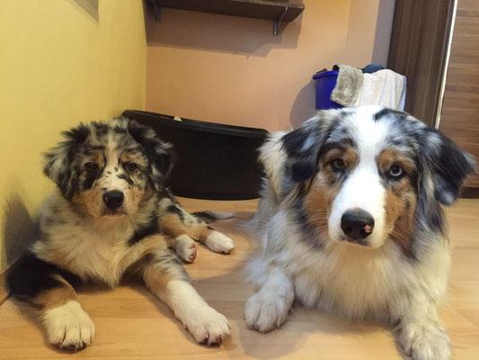 10 Wochen alt - Pepper und ihre Halbschwester Tinka