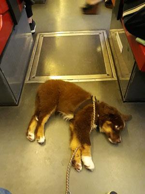 Bahnfahren ganz entspannt
