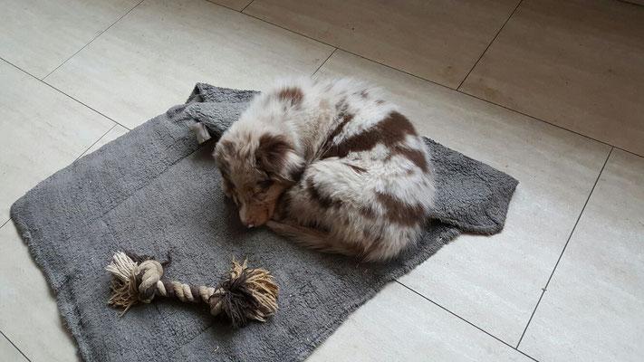 10 Wochen alt - Schlafen im neuen Zuhause