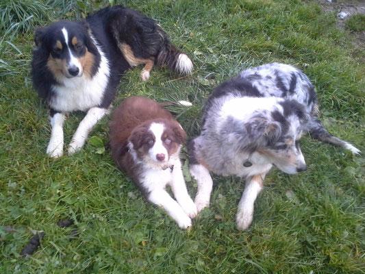 Ruby (9 Wochen) mit Sunnys Mama (rechts) und Sunnys Schwester (links)