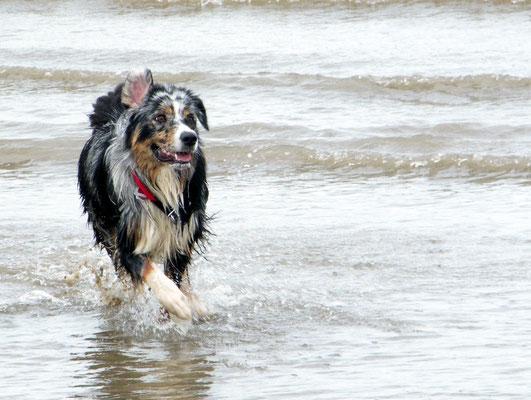 Hundestrand in Krautsand